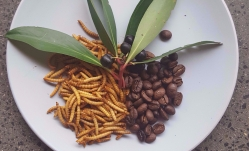 Insect for Food and Feed